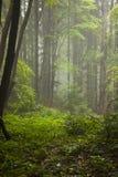 Niebla en madera Imagen de archivo libre de regalías