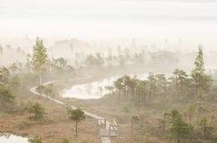Niebla en pantano Fotos de archivo libres de regalías