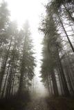 Niebla en Tatras Imagen de archivo libre de regalías
