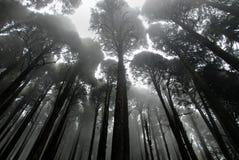 Niebla en un bosque imagenes de archivo