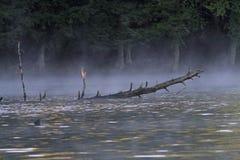 Niebla en un lago wilderness Foto de archivo libre de regalías
