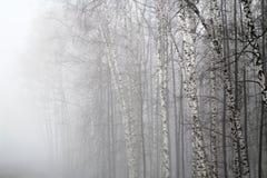 Niebla en una madera Imagen de archivo libre de regalías