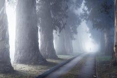 Niebla entre los árboles en la entrada al cementerio imagen de archivo
