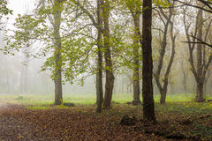 Niebla fría en bosque del otoño Imagenes de archivo