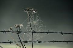 Niebla Galés en el parque de Snowdonia Imágenes de archivo libres de regalías