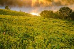 niebla gruesa de la mañana en el bosque del verano Foto de archivo