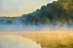niebla gruesa de la mañana en el bosque del verano Fotografía de archivo