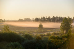 niebla gruesa de la mañana en el bosque del verano Imagen de archivo