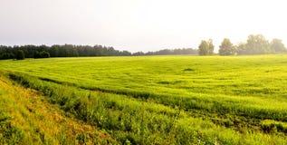 niebla gruesa de la mañana en la niebla gruesa de la mañana del bosque del verano en el bosque en la charca Paisaje de la mañana  Imagen de archivo libre de regalías