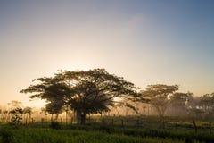 Niebla hermosa de la mañana en la República Dominicana Imágenes de archivo libres de regalías