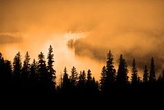 Niebla, luz del sol caliente y árboles de pino Fotografía de archivo libre de regalías