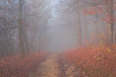 Niebla mística Fotos de archivo libres de regalías