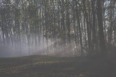Niebla mística Foto de archivo