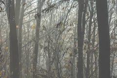 Niebla mística Imágenes de archivo libres de regalías