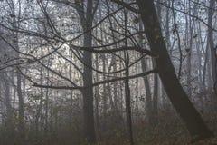 Niebla mística Fotografía de archivo libre de regalías
