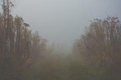 Niebla mística Imagen de archivo