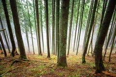 Niebla misteriosa en el bosque verde Foto de archivo libre de regalías
