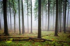 Niebla misteriosa en el bosque verde Fotos de archivo libres de regalías
