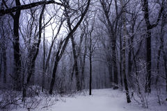 Niebla oscura del bosque del invierno Foto de archivo libre de regalías