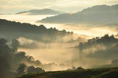 Niebla por la mañana Fotos de archivo libres de regalías