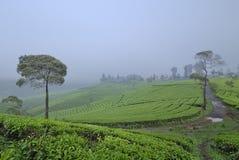 Niebla por todo la colina Fotos de archivo libres de regalías