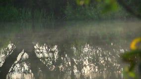 Niebla que asoma sobre el río, reflexiones de la mañana del árbol en agua almacen de video