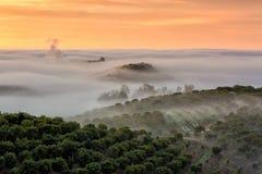 Niebla que se retrasa sobre el vinyard Fotos de archivo libres de regalías