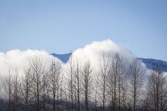 Niebla que sube sobre abedules en invierno Fotos de archivo
