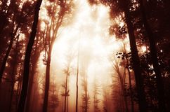 Niebla roja en bosque frecuentado Fotos de archivo libres de regalías