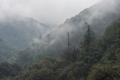 Niebla sobre el bosque Foto de archivo