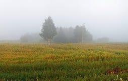 Niebla sobre el campo Imagen de archivo libre de regalías