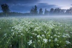 Niebla sobre el prado Foto de archivo