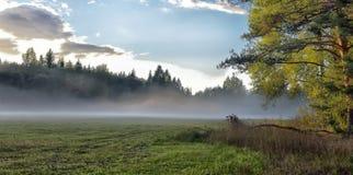 Niebla sobre el prado Imagen de archivo