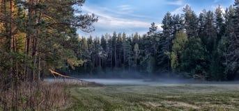 Niebla sobre el prado Imagenes de archivo