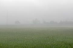 Niebla sobre el prado Fotografía de archivo libre de regalías