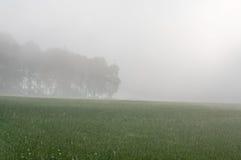 Niebla sobre el prado Fotos de archivo libres de regalías