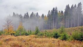 Niebla sobre pino fotografía de archivo