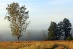 Niebla sobre prado Imagen de archivo libre de regalías