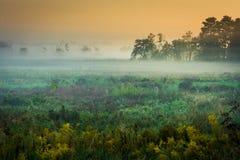 Niebla suspendida bajo sobre el prado Imágenes de archivo libres de regalías