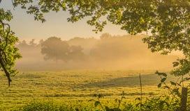 Niebla a través de los árboles de Sussex foto de archivo