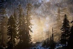 Niebla y árboles fotos de archivo libres de regalías