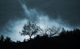 Niebla y árboles mágicos fotografía de archivo libre de regalías