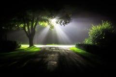 Niebla y luz en Wiesmoor Imagenes de archivo