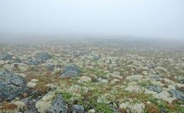 Niebla y musgo Fotos de archivo libres de regalías