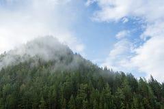 Niebla y nubes sobre la colina del taiga con los árboles de pino Foto de archivo