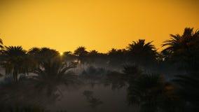 Niebla y salida del sol sobre el bosque de la palmera, 4K ilustración del vector