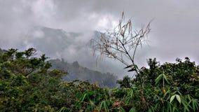 Niebla y verde en el mountai Imagenes de archivo