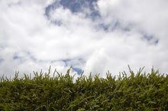 niebo żywopłotu Zdjęcia Stock