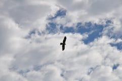 orła niebo Zdjęcia Royalty Free