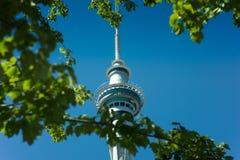 Niebo Basztowy Auckland przez drzew Zdjęcie Royalty Free